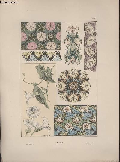 GRAVURE 19eme COULEURS - PLANCHE N°14 - LISERON