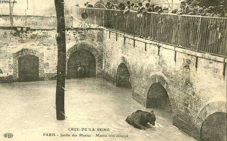 CARTE POSTALE - CRUE DE LA SEINE - JARDIN DES PLANTES
