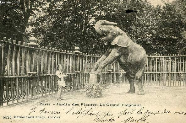 CARTE POSTALE - PARIS - JARDIN DES PLANTES LE GRAND ELEPHANT