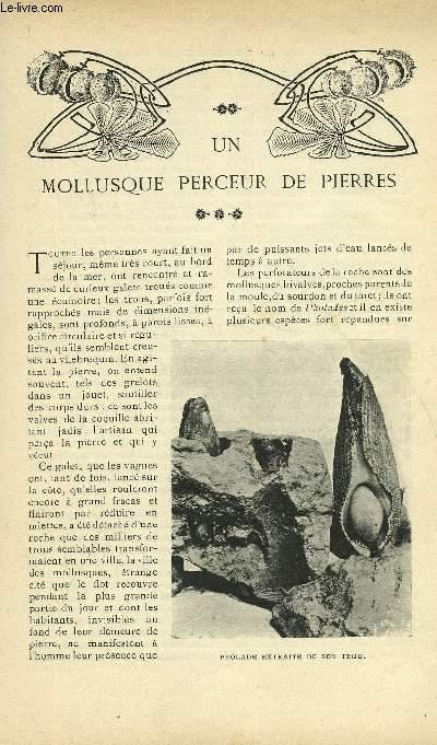 LE MONDE MODERNE TOME 21 - UN MOLLUSQUE PERCEUR DE PIERRES + LA CHAPELLE D'URONIA