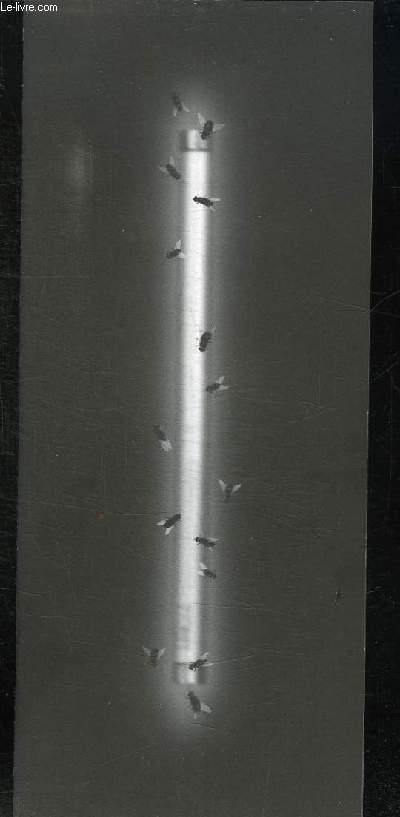 BROCHURE. A L AUBE DES MOUCHES EXPOSITION DU 3 AU 14 FEVRIER 1999.