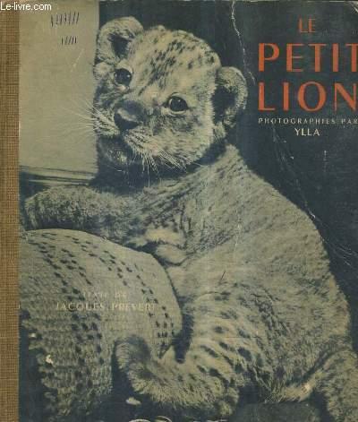 LE PETIT LION.