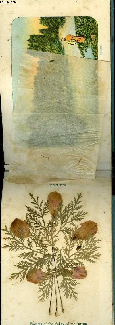 HERBIER NATUREL - FLEURS ET VUE DE LA TERRE SAINTE JERUSALEM