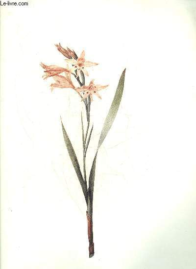 Redoute lilies - 50 selected prints