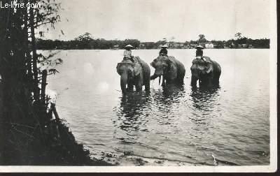 1 PHOTO-CARTE POSTALE EN NOIR ET BLANC DIMENSION 9 X 14 Cm : VIET-NAM - ANNAM / HUE - LA BAIGNADE DES ELEPHANTS DANS LA RIVIERE DES PARFUMS - DATE DU 02.04.1949.