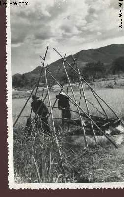 1 PHOTO-CARTE POSTALE EN NOIR ET BLANC DIMENSION 9 X 14 Cm : VIET-NAM - SCENE DE PAYSANS SUR UNE RIZIERE ALIMENTANT DE L'EAU - CARTE DATEE 17.02.1954.