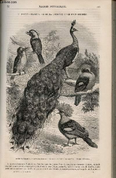 LE MAGASIN PITTORESQUE - Livraison n°014 - Le martin-chasseur , le goura couronné et le paon spécifère.