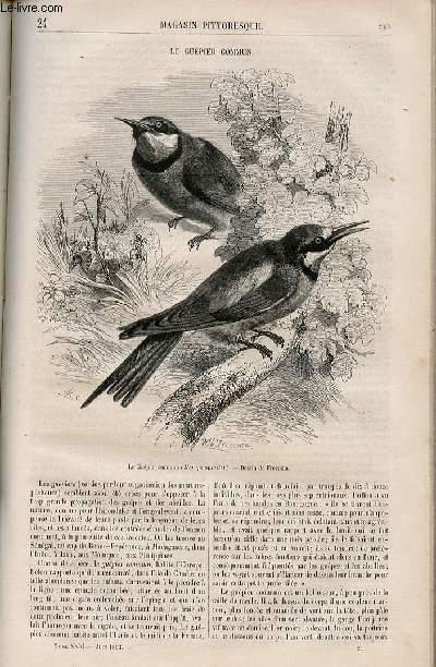 LE MAGASIN PITTORESQUE - Livraison n°024 - Le guêpier commun.