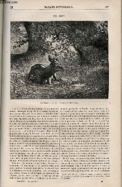 LE MAGASIN PITTORESQUE - Livraison n°028 - Les cerfs.