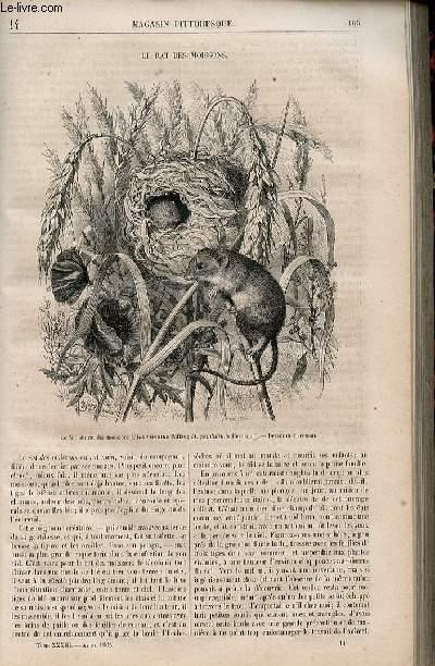 LE MAGASIN PITTORESQUE - Livraison n°014 - Le rat des moissons.
