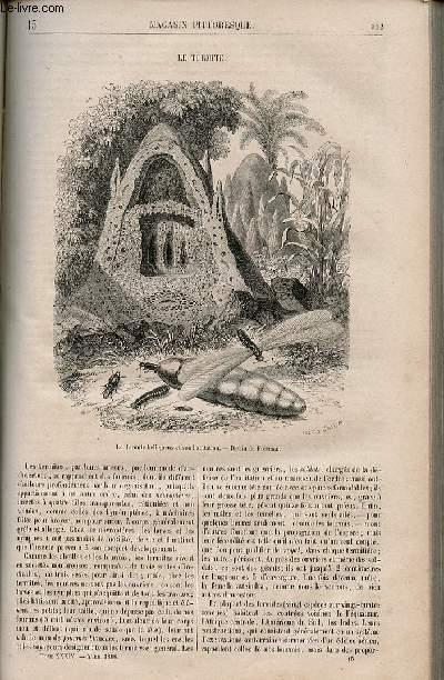 LE MAGASIN PITTORESQUE - Livraison n°015 - Le termite.