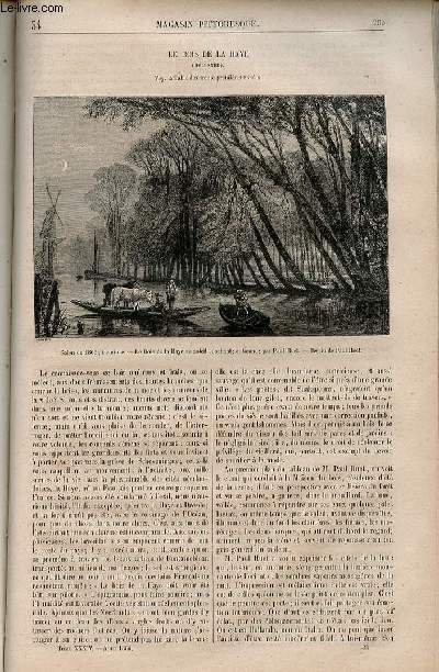 LE MAGASIN PITTORESQUE - Livraison n°034  - Le bois de la Haye (Hollande).
