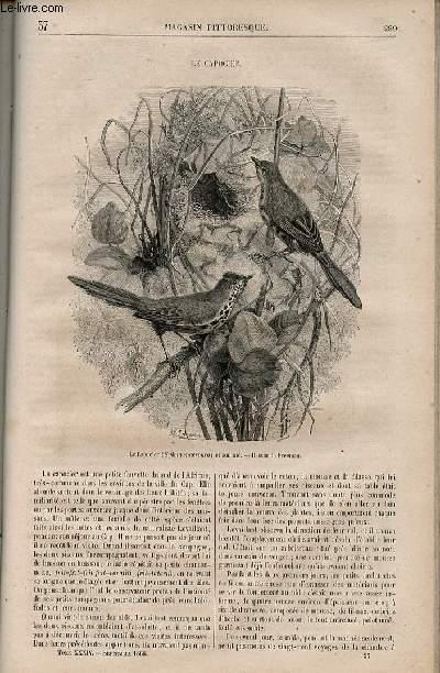 LE MAGASIN PITTORESQUE - Livraison n°037 - Le capocher.