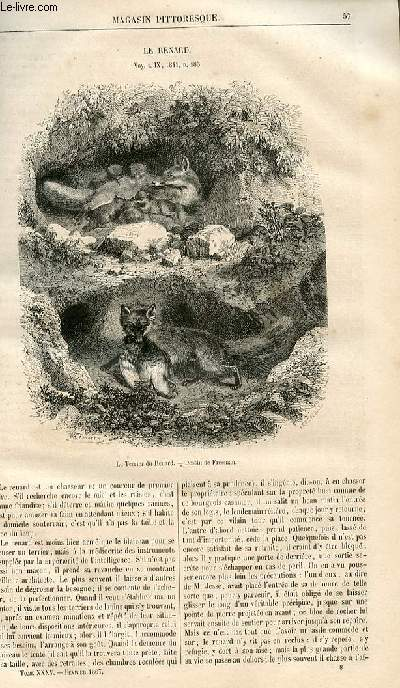 LE MAGASIN PITTORESQUE - Livraison n°008 - Le renard.