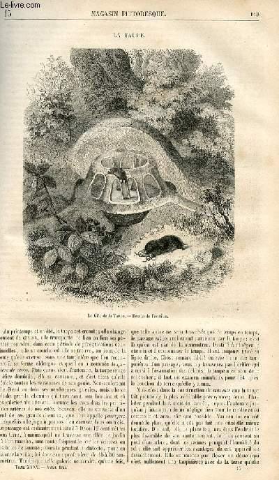 LE MAGASIN PITTORESQUE - Livraison n°015 - La taupe.