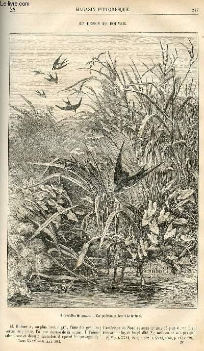 LE MAGASIN PITTORESQUE - Livraison n°028 - Un dessin de Bodmer.