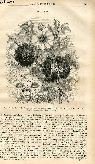 LE MAGASIN PITTORESQUE - Livraison n°047 - Les cynips.