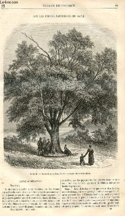 LE MAGASIN PITTORESQUE - Livraison n°012 - Sur els formes naturelles du saule.