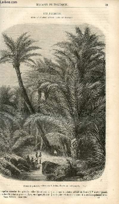 LE MAGASIN PITTORESQUE - Livraison n°012 - Les palmiers , leur véritable aspect dans le paysage.