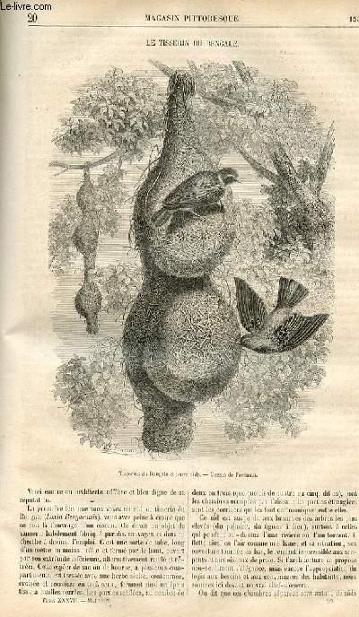 LE MAGASIN PITTORESQUE - Livraison n°020 - Le tisserin du bengale.
