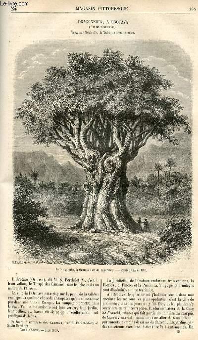 LE MAGASIN PITTORESQUE - Livraison n°024 - Dragonnier à Orotava (île de Ténériffe).