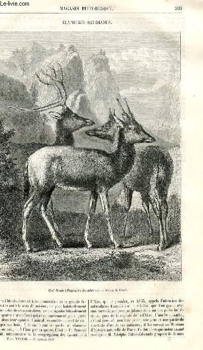 LE MAGASIN PITTORESQUE - Livraison n°047 - Elaphurus davidianus.
