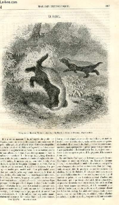 LE MAGASIN PITTORESQUE - Livraison n°051 - Le ratel.