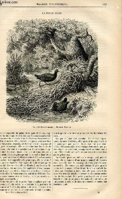 LE MAGASIN PITTORESQUE - Livraison n°30 - La poule d'eau.