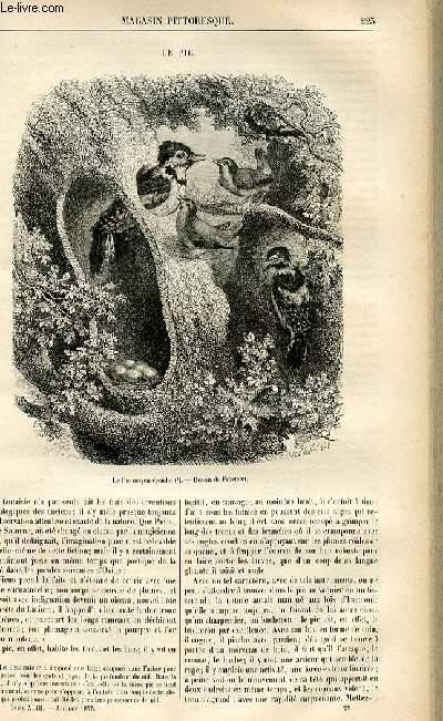 LE MAGASIN PITTORESQUE - Livraison n°29 - Le pic.