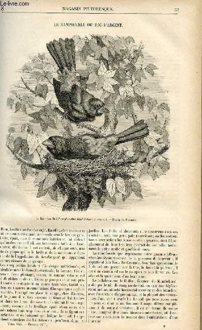 LE MAGASIN PITTORESQUE - Livraison n°08 - Le ramphocèle ou bec d'argent.