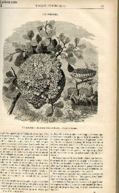 LE MAGASIN PITTORESQUE - Livraison n°11 - Les polistes.