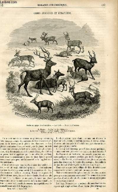 LE MAGASIN PITTORESQUE - Livraison n°34 - Cerfs indigènes et étrangers .