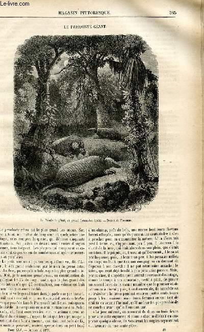 LE MAGASIN PITTORESQUE - Livraison n°49 - Le priodonte géant.
