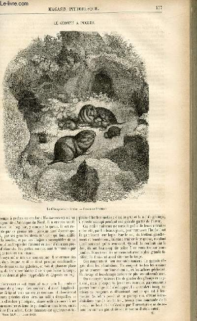 LE MAGASIN PITTORESQUE - Livraison n°23 - Le géomys à poches.