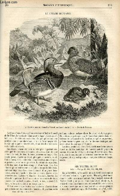 LE MAGASIN PITTORESQUE - Livraison n°35 - le canard mandarin.