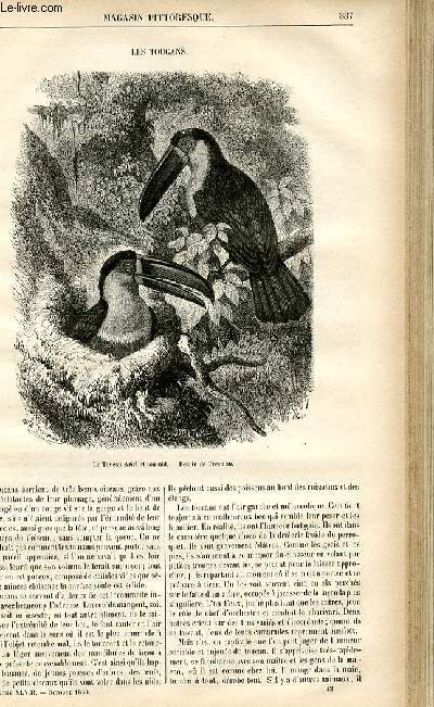 LE MAGASIN PITTORESQUE - Livraison n°43 - Les toucans.