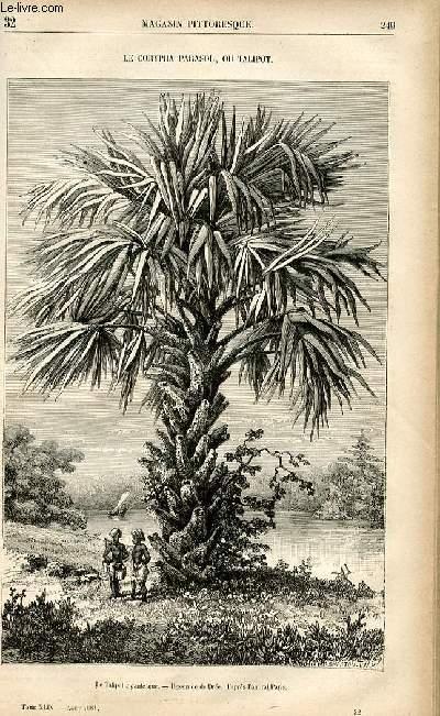 LE MAGASIN PITTORESQUE - Livraison n°32 - Le corypha parasol ou talipot.