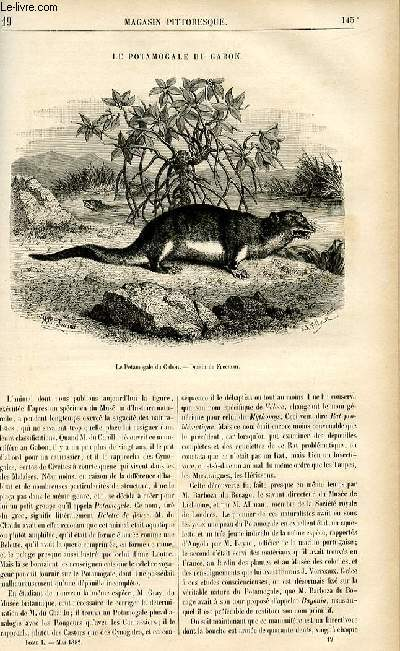 LE MAGASIN PITTORESQUE - Livraison n°19 - Le potamogale du Gabon.