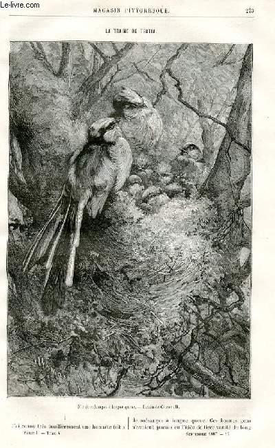 LE MAGASIN PITTORESQUE - Livraison n°17 - La traine de Tertia par Girardin.