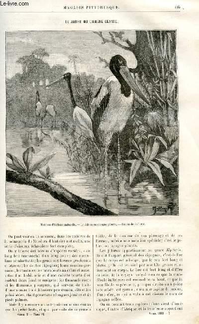 LE MAGASIN PITTORESQUE - Livraison n°07 - Le jabiru ou cigogne géante par Charles Brongniart.