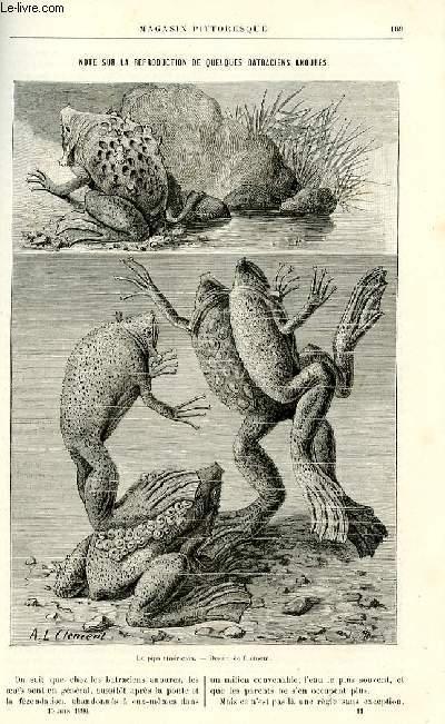 LE MAGASIN PITTORESQUE - Livraison n°11 - Note sur la reproduction de quelques batraciens anoures par Juillerat.