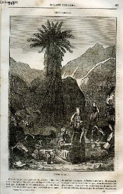 Le magasin universel - tome second - Livraison n°24 - Les palmiers.