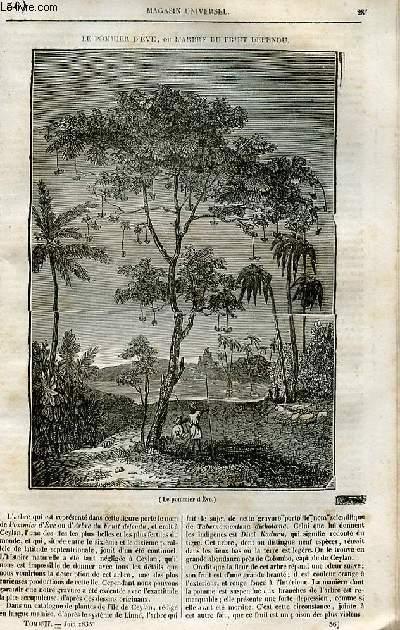 Le magasin universel - tome second - Livraison n°36 - Le pommier d'Eve ou l'arbre du fruit défendu.