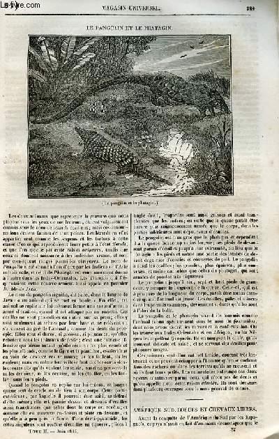 Le magasin universel - tome second - Livraison n°37 - Le pangolin et le phatagin.