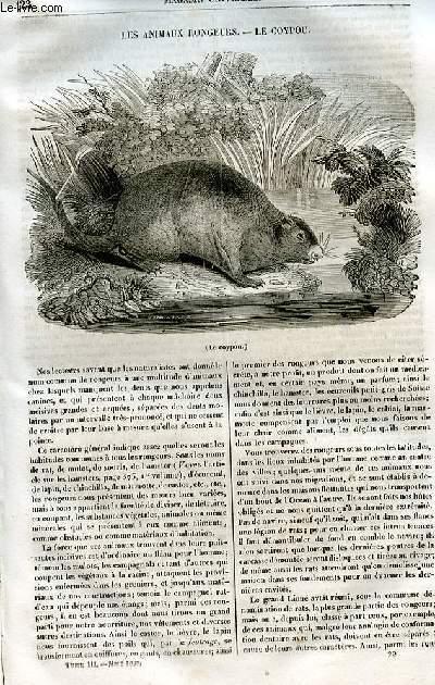 Le magasin universel - tome troisième - Livraison n°23 - Les animaux rongeurs - le coypou.