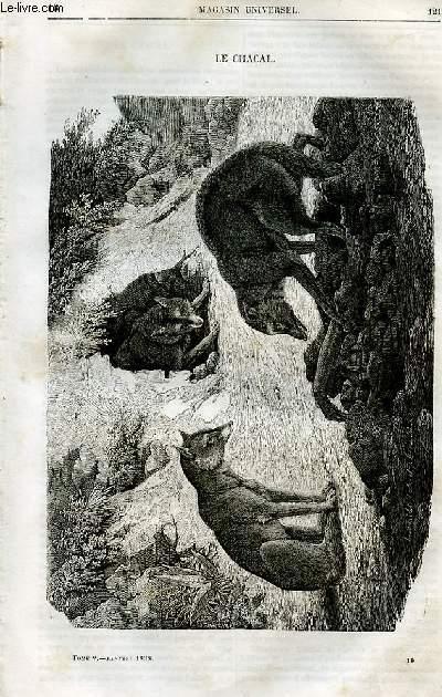 Le magasin universel - tome cinquième - Livraison n°16 - Le chacal.