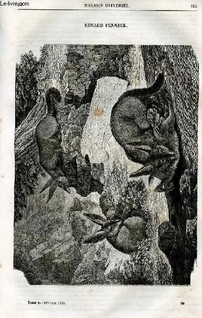 Le magasin universel - tome cinquième - Livraison n°20 - Renard fenneck.