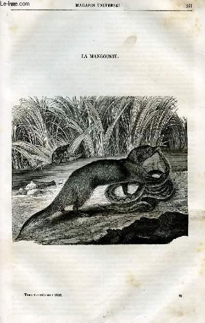 Le magasin universel - tome cinquième - Livraison n°21 - La mangouste.