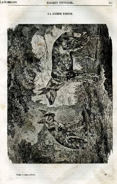 Le magasin universel - tome cinquième - Livraison n°22 - La hyène peinte.