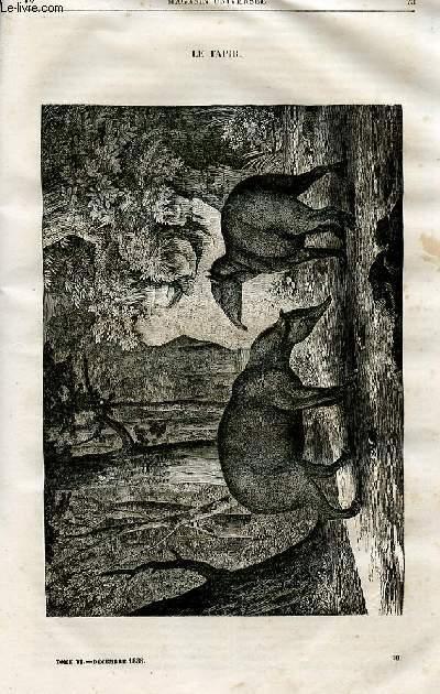 Le magasin universel - tome sixième - Livraison n°10 - Le tapir.